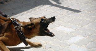 Aggressive Dog | Aggressive Dog Breeds