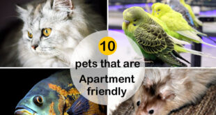 Best Pets for Apartments