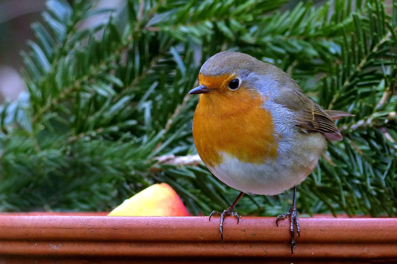 Care of Finch Bird