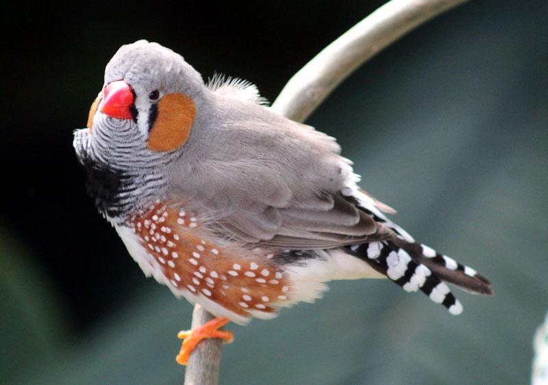 Finches Health care