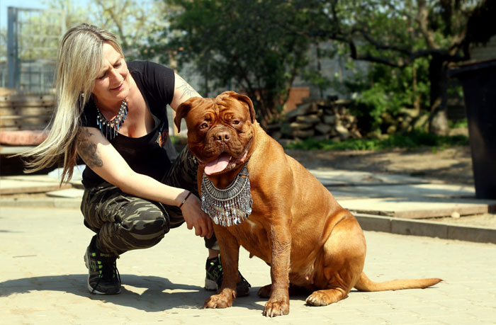 How to care for large breed dogs | Health issues of Giant dogs