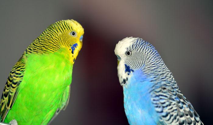 Bestfriendly Pet birds